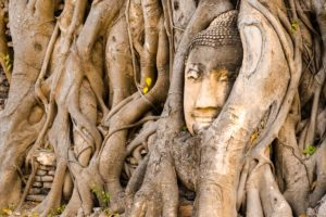 An image of a Bhudda head, overgrown by trees